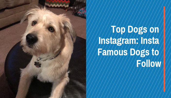 Top Dogs on Instagram: Insta Famous Dogs to Follow