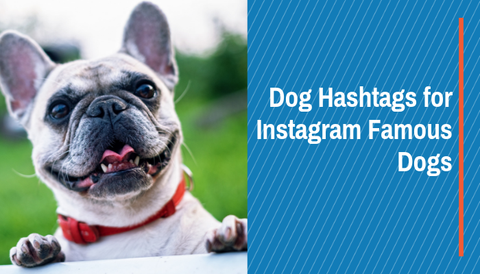 Dog Hashtags for Instagram Famous Dogs